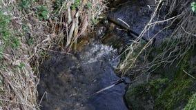 Skogvattenfall och rocks lager videofilmer