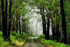 skogväg Fotografering för Bildbyråer