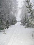 skogvinter Arkivfoto
