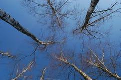 skogvinter Royaltyfri Foto