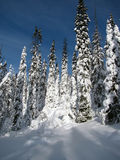 skogvinter royaltyfria bilder