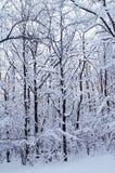 skogvinter Arkivbild