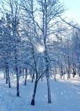 skogvinter Royaltyfria Foton