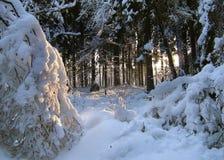 skogvinter fotografering för bildbyråer