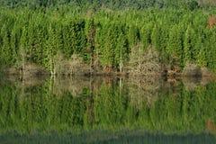 skogvinter Arkivfoton