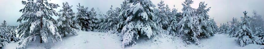 Skogvinter Mycket snö Arkivbilder
