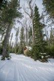 Skogvinterväg Fotografering för Bildbyråer