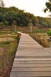 skogwalkway Arkivbild