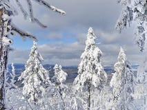 Skojad kulle, Liberec område, Tjeckien, Royaltyfri Fotografi