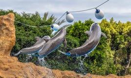 Skok delfiny obraz royalty free