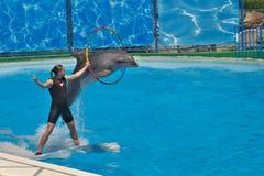 Skok flora delfin zdjęcia royalty free