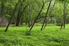 Free Skokie Lagoons Floodplain Forest  701763 Stock Images - 171845734