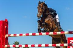 Skokowa Końska jeźdza zbliżenia akcja Zdjęcie Royalty Free