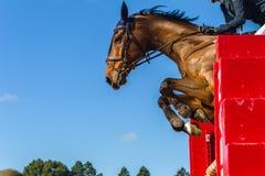 Skokowa Końska jeźdza zbliżenia akcja Zdjęcia Stock