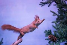 Skokowa wiewiórka Obrazy Royalty Free