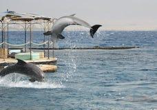 Skokowy delfin fotografia royalty free