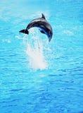skokowy delfinu morze Fotografia Royalty Free