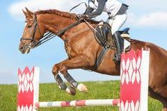 Skokowy koń zdjęcia royalty free