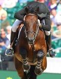Skokowy koń Obraz Royalty Free