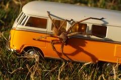 Skokowy paj?k na samochodzie obraz royalty free