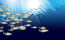 Skola av den rosa laxfisken Marin- liv Vektorillustration som optimeras från för att användas i bakgrundsdesignen, garnering arkivfoton
