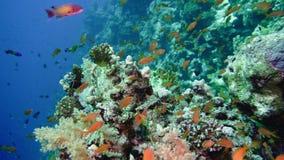 Skola av den tropiska fisken i en färgrik korallrev med vattenyttersida i bakgrund, Röda havet, Egypten vektor illustrationer