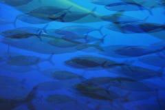 Skola av fisk 02393 fotografering för bildbyråer