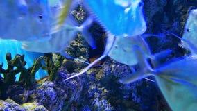Skola av fisken och korallreven lager videofilmer