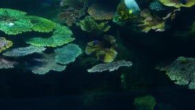Skola av fisken av olik art som simmar i rent blått vatten av det stora akvariet Marin- undervattens- tropiskt liv arkivfilmer