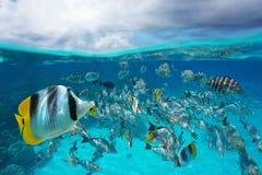 Skola av undervattens- himmel för tropisk fisk med molnet arkivfoton