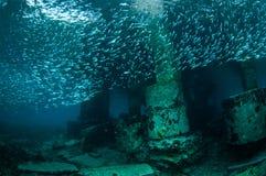 Skola fiskar i Gili, Lombok, Nusa Tenggara Barat, Indonesien det undervattens- fotoet Arkivbild