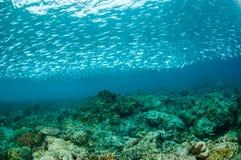 Skola fiskar i Gili, Lombok, Nusa Tenggara Barat, Indonesien det undervattens- fotoet Royaltyfria Foton