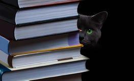 Skolböcker på skrivbordet, utbildningsbegrepp, utbildar, teknologi, katten, färgstänk Royaltyfri Fotografi