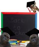 Skolförvaltning och djur Arkivfoton