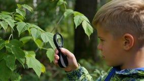Skolpojke i parkerastudierna av växter och nasekomye till och med ett förstoringsglas Studie av världen utanför, förträning Royaltyfri Foto