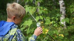Skolpojke i parkerastudierna av växter och nasekomye till och med ett förstoringsglas Studie av världen utanför, förträning Arkivfoton