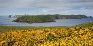 Skomer ö Pembrokeshire Wales UK Arkivfoto