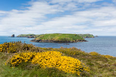 Skomer Island Royalty Free Stock Images