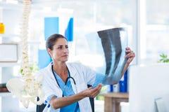 Skoncentrowana lekarka analizuje promieniowania rentgenowskie obrazy royalty free