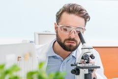 Skoncentrowany brodaty naukowiec pracuje z mikroskopem obraz stock