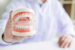Skoncentrowany dentysty obsiadanie przy sto?em z szcz?k? pobiera pr?bki z?bu modela w stomatologicznej biurowej fachowej stomatol obrazy royalty free
