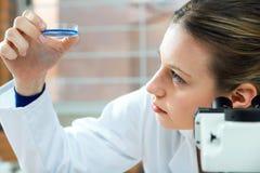 Skoncentrowany naukowiec robi eksperymentowi w laboratorium fotografia stock