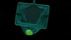 Skopa-netto med den gröna druvan inom att sväva under genomskinligt vatten på svart bakgrund lager videofilmer