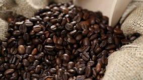 Skopa som skjuts in i kaffebönor i säckvävsäck stock video