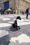 Civilians protesting the violence towards to street dogs,  solid. Skopje, Macedonia - April 9, 2017: Civilians protesting the violence towards to street dogs Royalty Free Stock Image