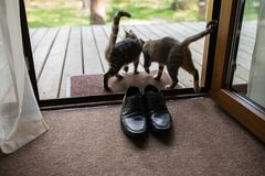 Skor för läder för svart man` s står på ingången Två tillfälliga katter sniffar skor för man` s Arkivfoto