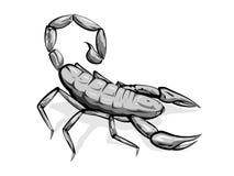 Skorpion Lizenzfreie Stockfotos