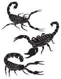 Skorpion ilustracji