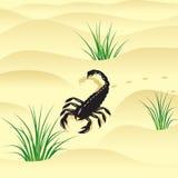 Skorpion. Royaltyfri Foto