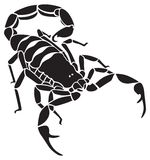 skorpion Fotografia Stock